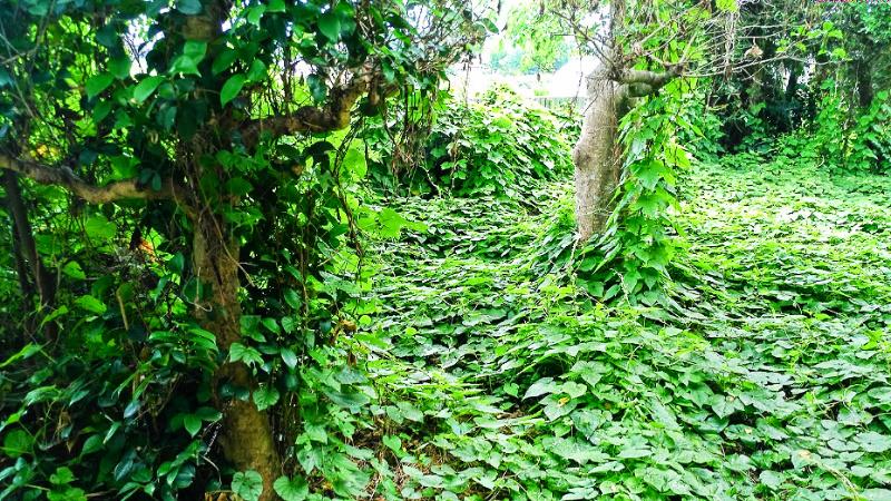 お庭を大掃除「除草」