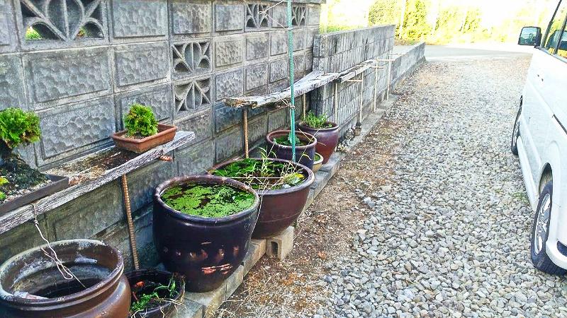 除草剤の「ラウンドアップ」