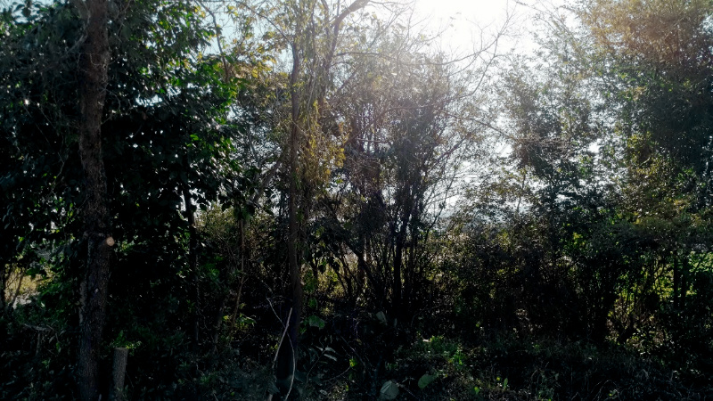 庭 大自然