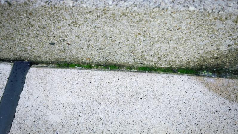 コケとーるスプレーで庭の苔掃除 -5-