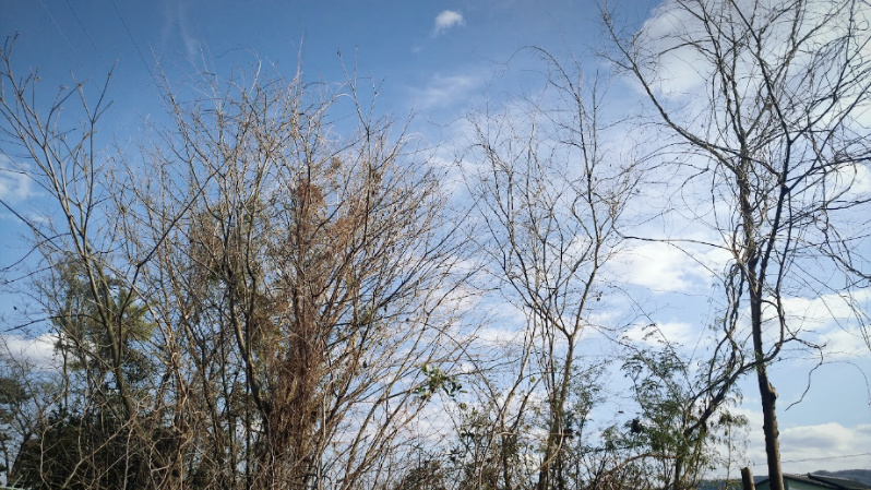 庭木の伐採・剪定 リョービ チェーンソー 電気のこぎり -1-