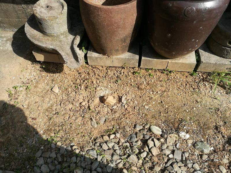 庭の水瓶の整理・清掃 雑草