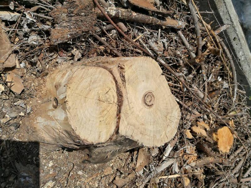 切り株-木の根-を電動ドリルで穴を空け除草剤で枯らす方法 -8-