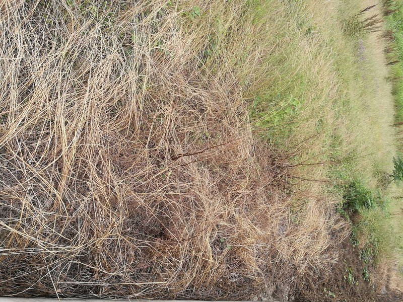 コスパが良い除草剤の効果・結果 -3-