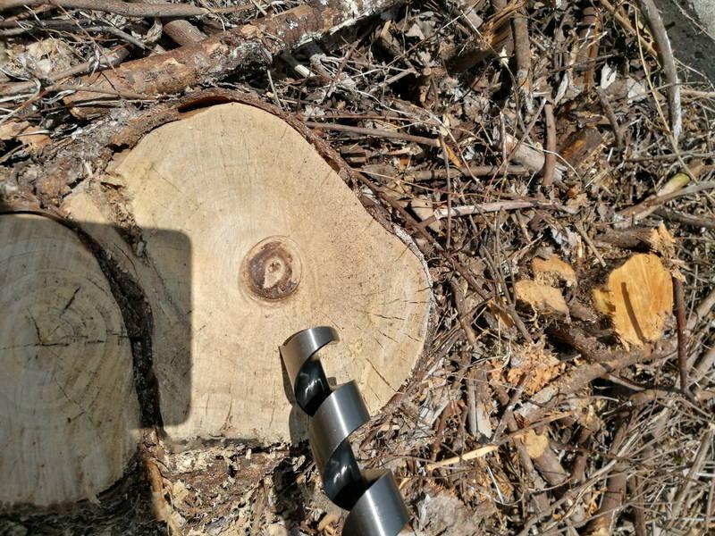 切り株-木の根-を電動ドリルで穴を空け除草剤で枯らす方法 -6-