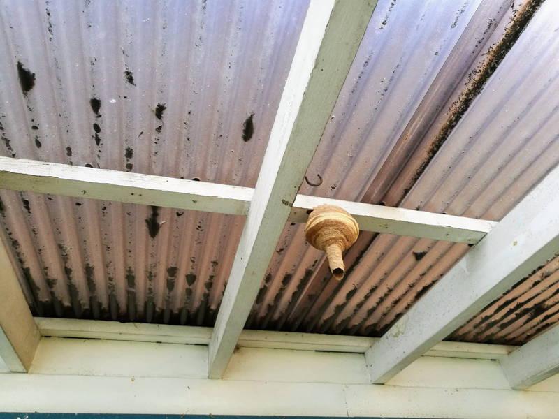 スズメ蜂の巣駆除
