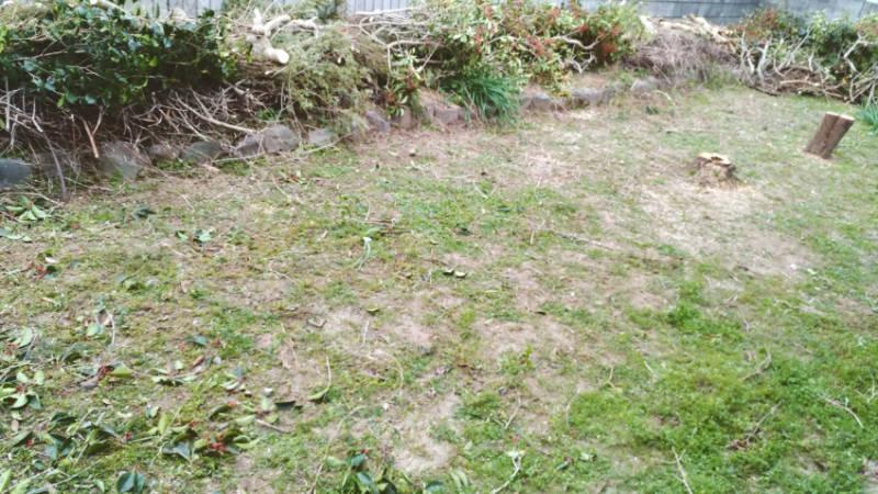 除草剤の効果 2ヶ月目 7月の時期 -6-