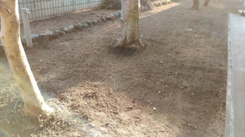 除草剤の効果 2ヶ月目 7月の時期 -5-