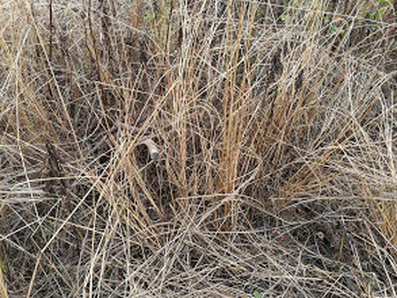 コスパが良い除草剤の効果・結果 -2-