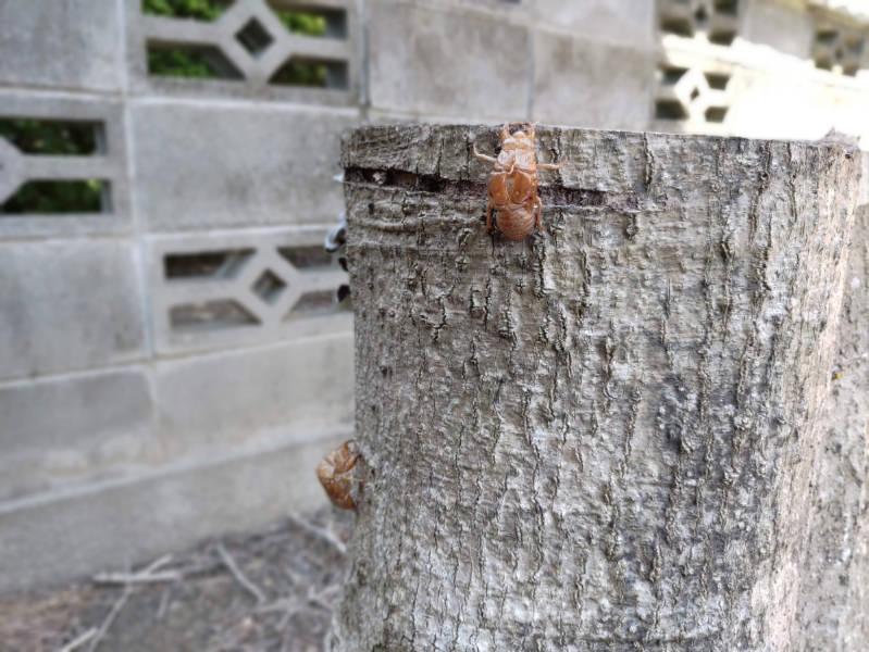 庭に住んでいる虫達 -6-