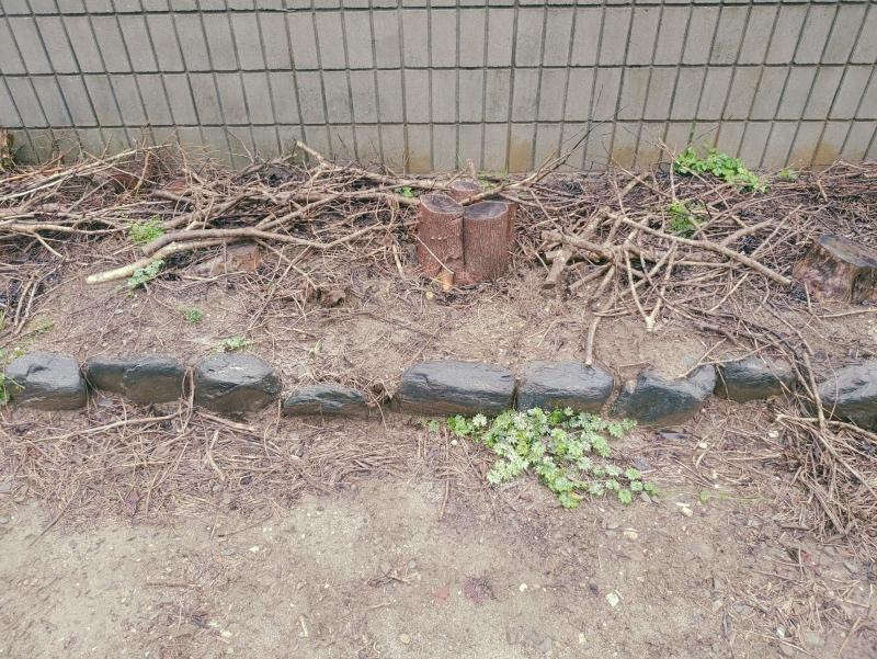 除草剤の効果 ネコソギ 粒タイプ -5-