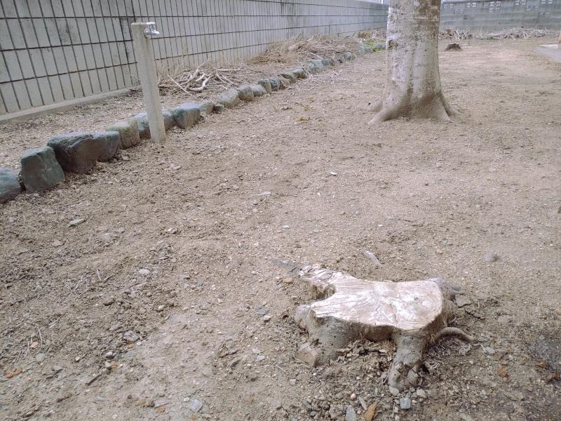 除草剤の効果 粒タイプ ネコソギ -3-