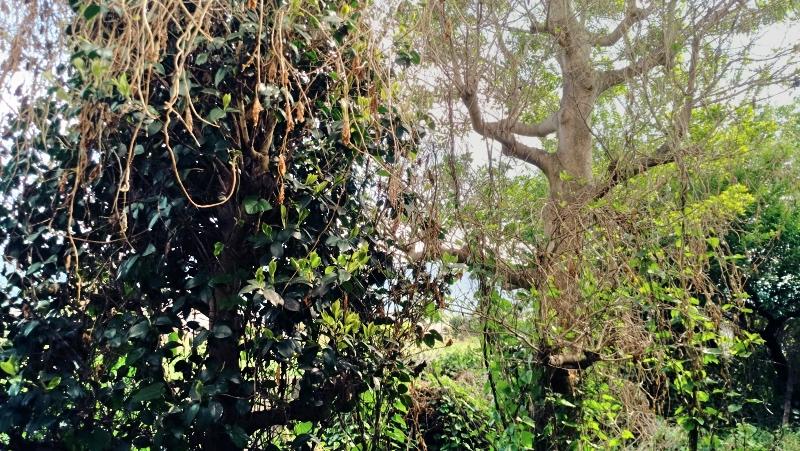 庭 森林2