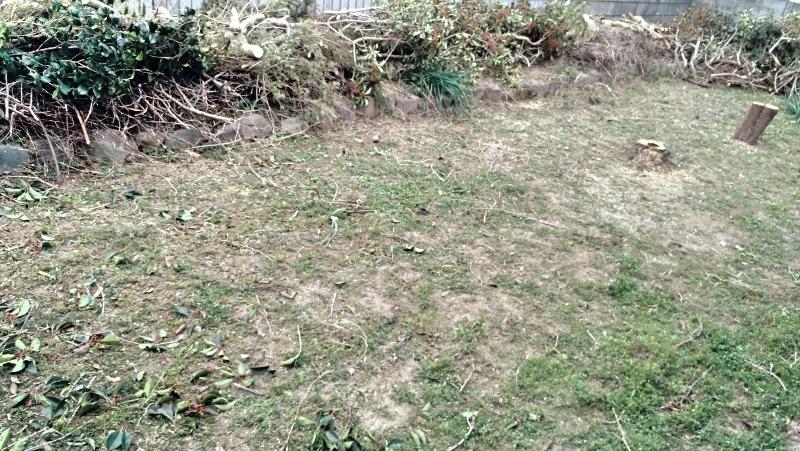 除草剤の効果 冬1月のレポート -5-