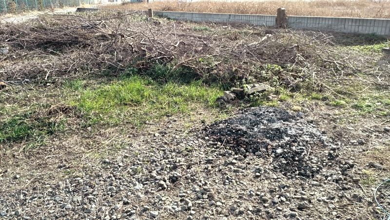 除草剤の効果 冬1月のレポート -6-