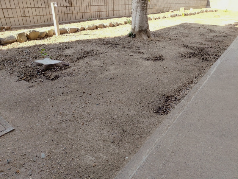 除草剤の効果 2019年6月梅雨時期 -1-