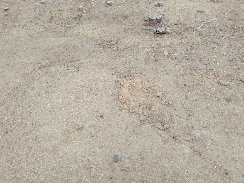 除草剤の効果 2019年6月梅雨時期 -7-