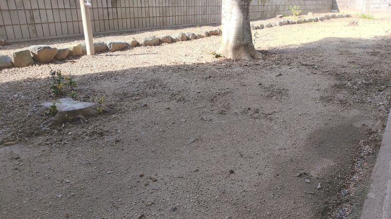 除草剤の効果 梅雨時期 -1-