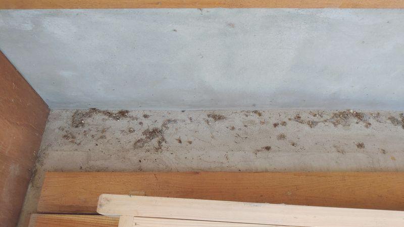 アシダカグモ対策 掃除 -2-
