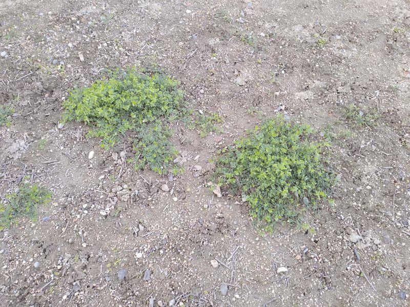 除草剤の効果 2020-01 -9-