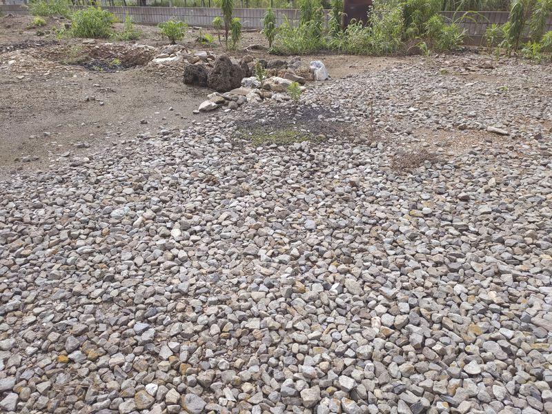 コロナに負けない除草対策 梅雨時期の除草剤の効果 -2-