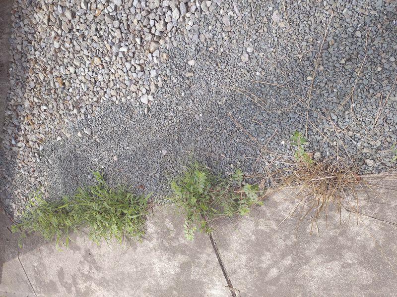 コロナに負けない除草対策 梅雨時期の除草剤の効果 -7-
