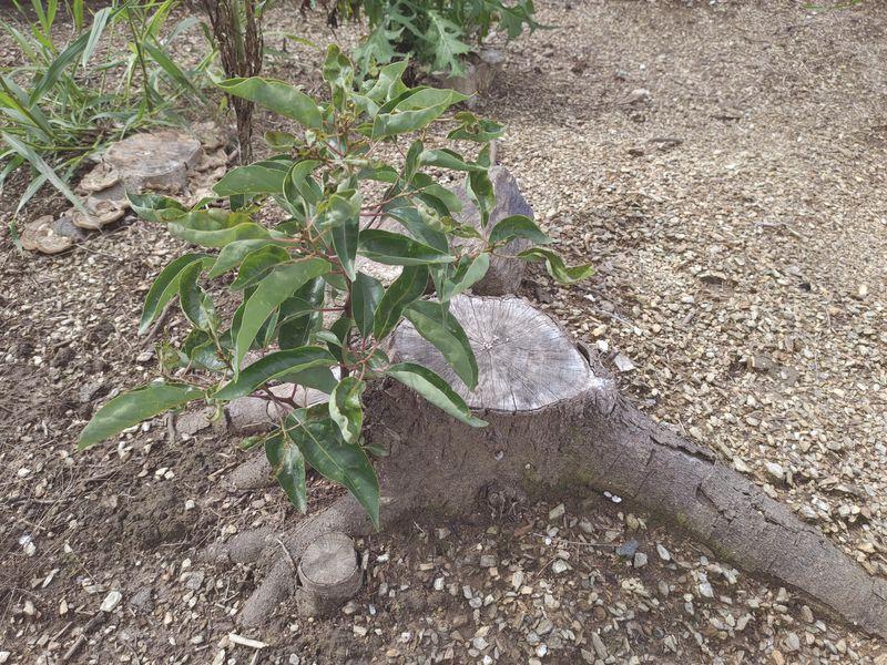 コロナに負けない除草対策 梅雨時期の除草剤の効果 -14-