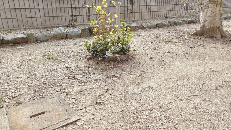 2021年1月の除草剤の効果P_20210105_122309
