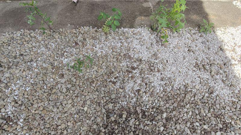 除草剤の効果 梅雨から夏前9