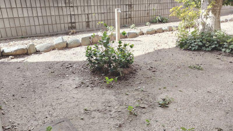 除草剤の効果 梅雨から夏前1