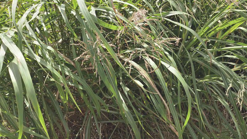 除草剤の効果 梅雨から夏前17