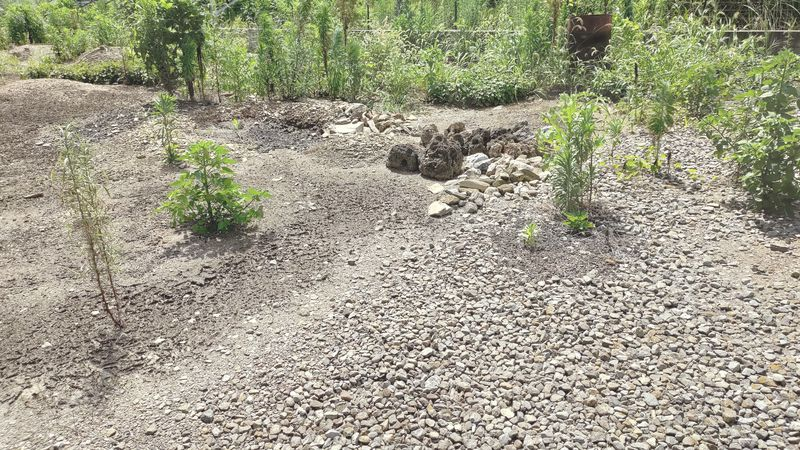 除草剤の効果 梅雨から夏前10
