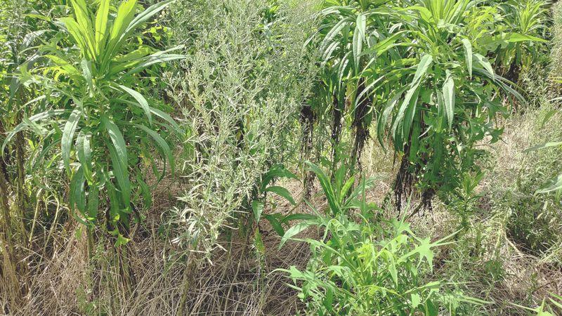 除草剤の効果 梅雨から夏前7